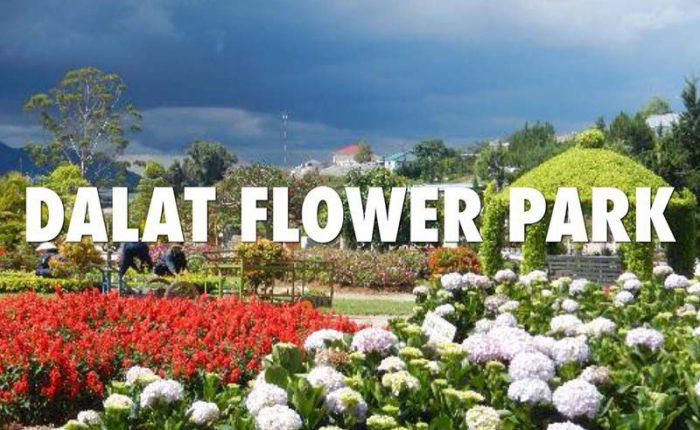 đà lạt flower